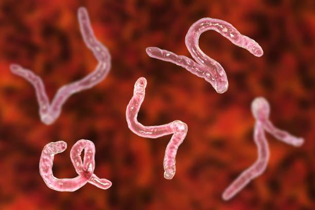 vermi intestinali fanno ingrassare